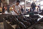 Smoke bat on a market stall Tomohon Sulawesi