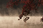 Morning fog at Comelle's pond