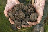 Black truffle - France