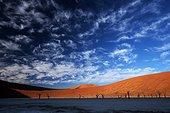 Death Acacia Dead Vlei Sossusvlei Namib Desert Namibia