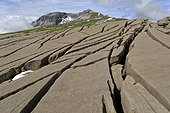 Red sandstone slabs Matolle The Desert Platé Alps France ; Red sandstone small Nummulites age Eocene (Tertiary Era - 45 Ma)