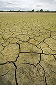 Cracked clay of a dry pond Dombes France