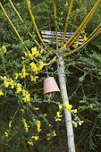 Insect shelters an organic garden ; Ce petit coin de nature est le cadre idéal pour vous parler de la faune auxiliaire du jardin ! Le fagot de tiges creuses servira de refuge aux abeilles solitaires comme les osmies. Le pot retourné empli de paille abritera les forficules (ou pince oreille) et il n'y aura plus qu'à les lâcher dans les arbres fruitiers envahis de pucerons. Le genêt en fleurs attire quant à lui les butineurs, une ressource précieuse au verger, d'autant plus qu'elle a tendance à se raréfier.