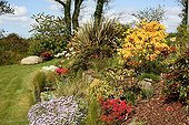 Perennials and shrubs in bloom in a garden in spring