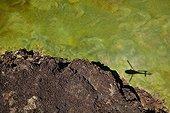 Ombre d'hélicoptère sur rivière Suguta Vallée du Rift Kenya ; La rivière Suguta provient du mont Silali qui est un volcan éteint.