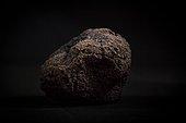 Périgord black truffle on a black background