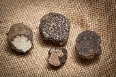 Truffles Canvas Richerenches Truffles Market in Provence