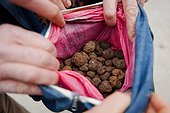 Truffles in bag Richerenches Truffles Market in Provence