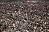 Agricultural land polluted by flying clay pigeons France ; near a shooting