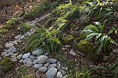 Pebble river and ferns in an undergrowth garden