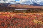 Tundra around Coal Lake in autumn Yukon Canada  ; Lakeland South