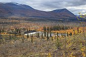 Burned in autumn forest around Rose Lake Yukon Canada ; Forest burned there ten years,