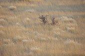 Savanna in the desert of Kalahari in Namibia