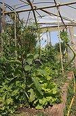 Truck farming under greenhouse