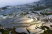 Rice terraces of Hani people - Yuanyang China ; Ailao mountains