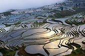 Rizières en terrasses de l'ethnie Hani - Yuanyang Chine  ; Montagnes Ailao