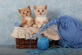 Kittens in basket and wool balls on blue background