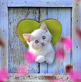 Kitten inside a blue heart limed wood