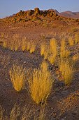 Brandberg mountains in the Namib Desert in Namibia