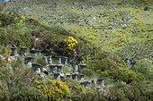 Hives in trunks Chestnut - Monts d'Ardèche France
