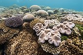Coral reef on the east coast - New Caledonia