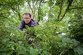 Climber pruner in a lime in the spring - France  ; Pruning friendly<br>Yvan Ciesla, Sittelle Elagage