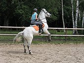 Rider on horse rearing - France