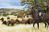 Gaucho on his horse watching wild horses - Patagonia Chile