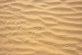 Sidewinder Horned rattle snake tracks on sand - California