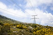 High voltage line over a sheep - France