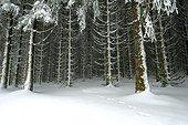 Empreinte animale s'enfonçant en forêt - Limousin France
