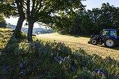 Meadow flowers and tractor - Préalpes d'Azur RNP  France