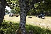 Collection of haystacks - Préalpes d'Azur RNP  France