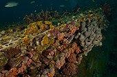 Marine life on top of Aquarius - Aquarius Reef Base  Floride