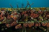 Marine life on  Aquarius - Aquarius Reef Base  Floride