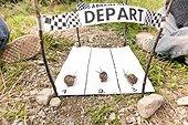 Brown gardensnail race with Children - France