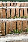 Smallholding Brown gardensnail - France