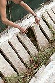 Checking Brown Gardensnails Livestock - France