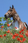 Girl and horse in a field Poppy - France