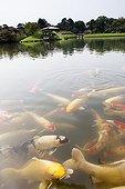 Koi pond - Korakuen Garden Okayama Japan  ; Garden walk Kaiyu style