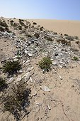 Dumpsite - Nature Reserve of Oued Massa Morocco