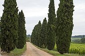 Garden and wineyards of Château de Carles - Gironde - France