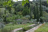 Italian cypress and furcraea in a garden