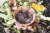 Redworms for composting in a garden