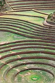 Inca agricultural site Moray - Sacred Valley of the Incas Peru