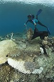 Snorkeling woman collecting crown of thorn starfish