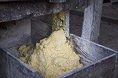Manufacture of Cassava flour - Amapa Brazil Amazon  ; Machine called Caititu or rapper to Cassava