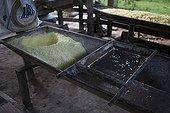 Manufacture of Cassava flour - Amapa Brazil Amazon  ; Cassava pulp and sieve before cooking