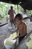 Manufacture of Cassava flour - Amapa Brazil Amazon  ; Child transferring cassava dough after being subdued in a bucket for his cooking<br>People Ribeirinhos