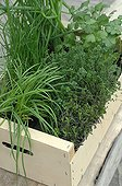 Aromatic plants in a tray